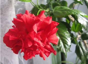 Подкормка роз весной и летом на даче и в домашних условиях 21