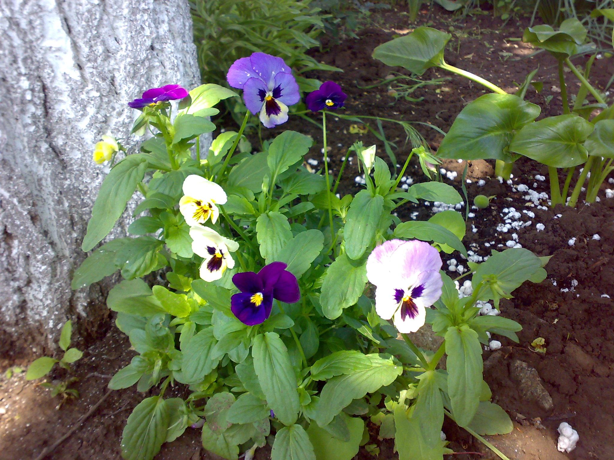 Домашние цветы в горшках уход