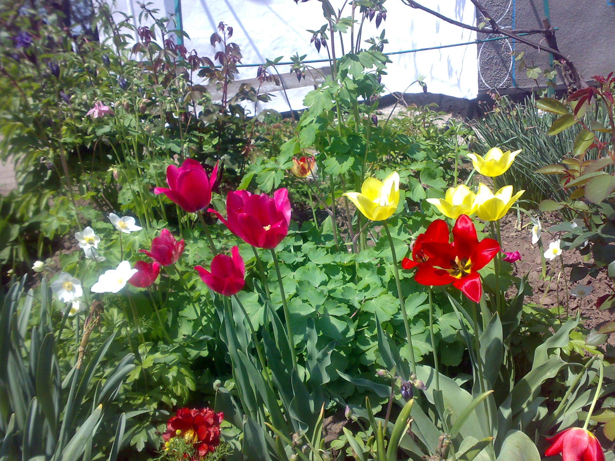 луковичные цветы фото: