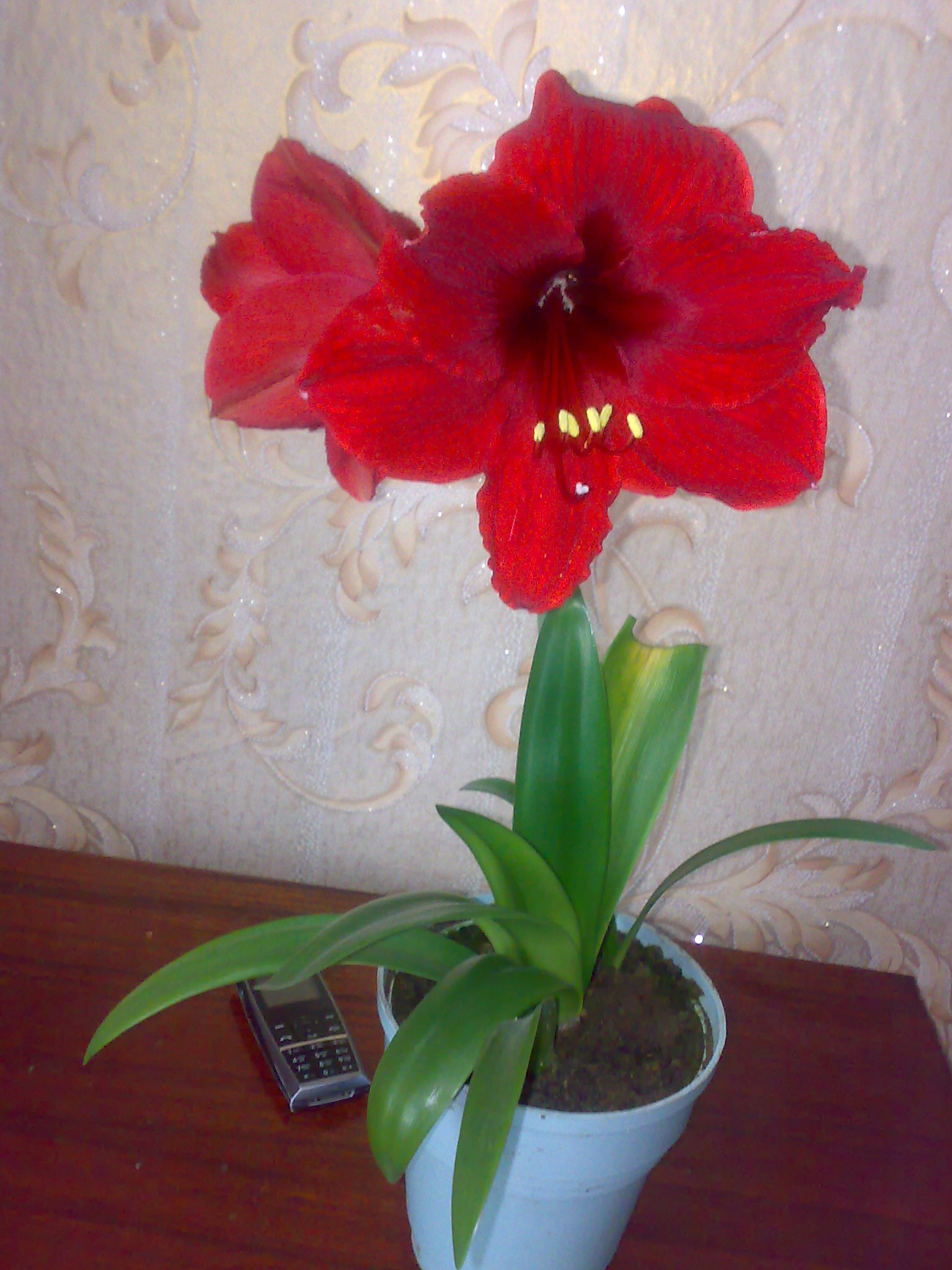 Комнатный цветок на букву г фото