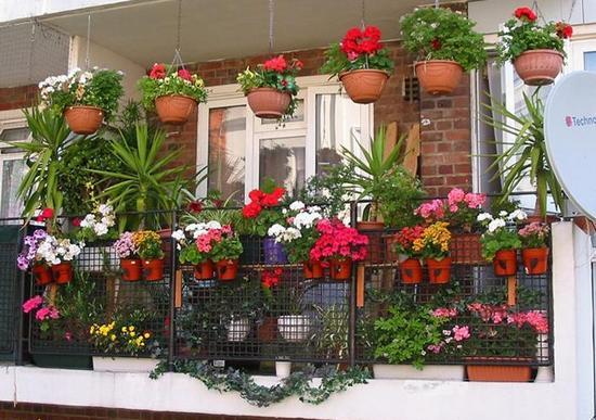 Названия и фото комнатных цветов