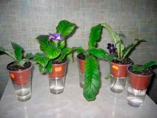 Фитильный полив растений