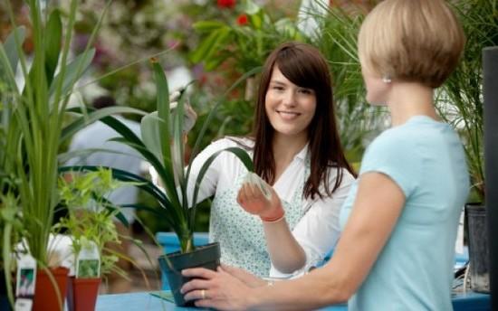 Как выбрать комнатное растение в магазине?
